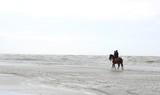 Reiten an der Nordsee - 168290590