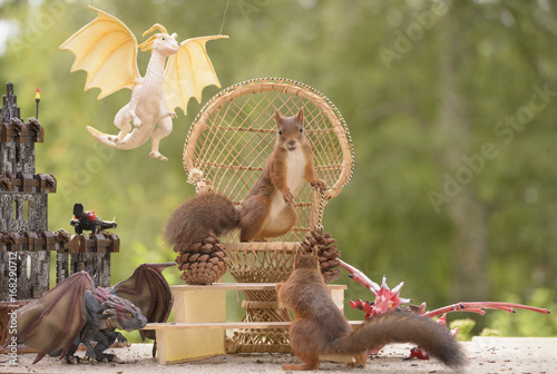 squirrels standing on a Armchair Poster