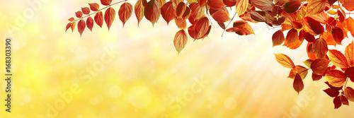 Tuinposter Oranje Herbst 137