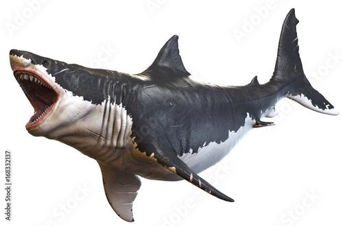 Fototapeta 3D rendering of Megalodon isolated on a white background.