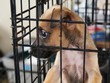 Little brown homeless puppy in a cage in an animal shelter, waiting for someone to adopt him