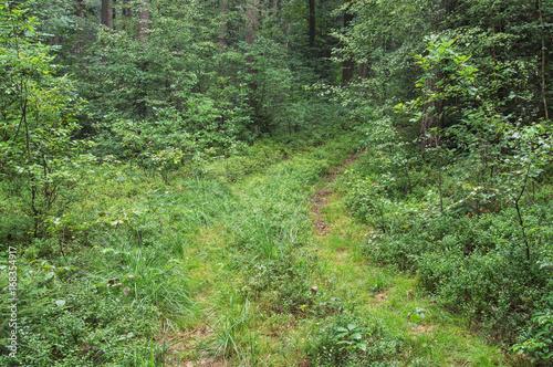 Foto op Plexiglas Weg in bos Leśna droga.