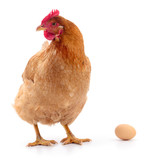 Hen and Egg - 168359141
