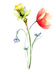 Poppy and Narcissus flowers