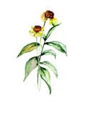Card template with Summer Gerbera flowers