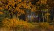 Dąb w barwach jesieni