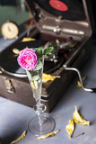 Pink rose in a glass on a background of a gramophone