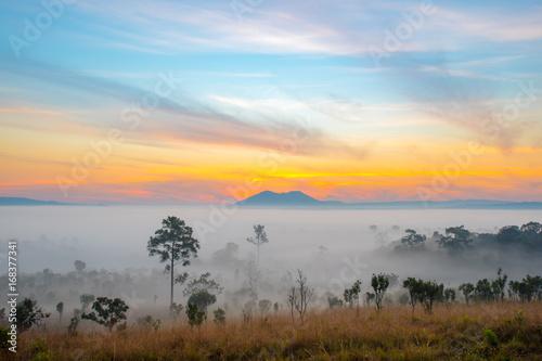 Dramatic fog, sunrise with beautiful vivid and romantic blue sky at Thung Sa Lang Luang, between Phitsanulok and Petchabun, Thailand.