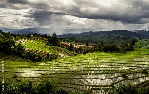 Papiers peints Gris traffic Amazing view of terraced paddy fied with dramatic cloudy sky full of melancholy, Thailand beautiful green landscape