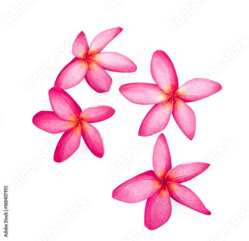 Plexiglas Plumeria leelawadee flowers