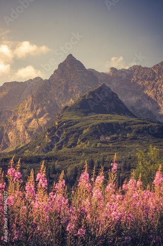 Aluminium Zalm Tatra mountains, Poland landscape, colorful flowers in Gasienicowa valley (Hala Gasienicowa), summer