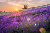 Blooming lavender fields in Poland, beautfiul sunrise - 168445121