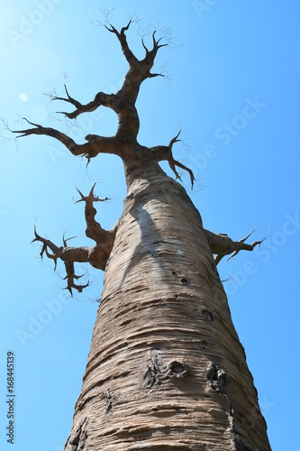 Poster Baobab Baobab