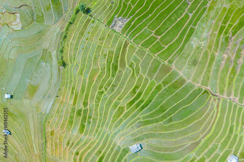 In de dag Rijstvelden Aerial top view photo from flying drone of green rice fields in countryside Land with grown plants of paddy and sea of fog at Pa Pong Piang, Thailand