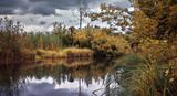 Заболоченная область озера с водными растениями на воде - 168465797