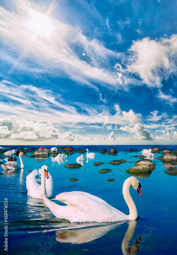 Fotobehang Zwaan Swans in the sea landscape with beautiful sky above