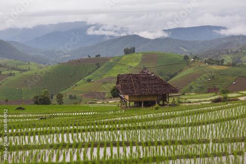 Fotobehang Rijstvelden Pa Bong Piang Rice terrrace
