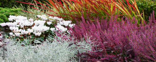 Herbst - Blumenbeet - Erika und Silberblatt