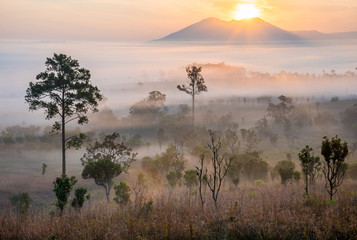 Dramatic fog, sunrise, beautiful vivid and romantic golden sky at Thung Sa Lang Luang, between Phitsanulok and Petchabun, Thailand.