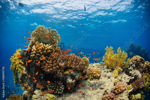 Beautiful coral reef with sealife Poster