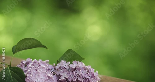 fresh lilac flowers on table
