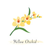 Colorful watercolor texture vector botanic garden flower yellow orchid
