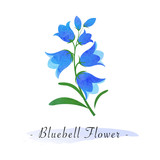 Colorful watercolor texture vector botanic garden flower bluebell flower - 168511967