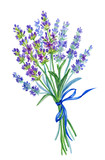 A bunch of lavender, watercolor drawing on a white background with clipping path. - 168519759