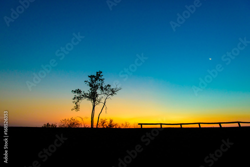 Silhouette of dry tree with beautiful morning sunbeam on the mountain Poster