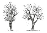 Trees autumn hand drawing vector. The foliage is falling. Sketch