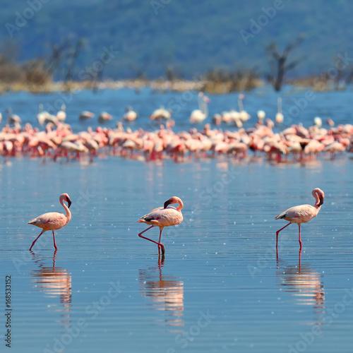 Foto op Aluminium Flamingo Flock of flamingos