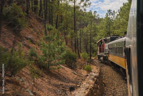 Fotobehang Weg in bos Tren