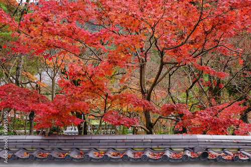 Landscape of Japanese garden at autumn © Phuong
