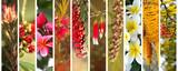 Australian plants  panoramic view - 168559572