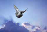 Dove in the air symbol of faith over shining sun - 168559770