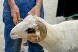 Eid Festival of sacrifices - 168566557