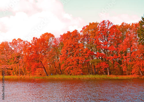 Fotobehang Rood traf. The view across the lake to red autumn forest.
