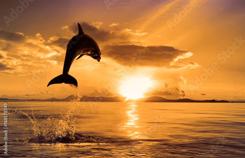 Aluminium Dolfijn beautiful dolphin leaping jumping from shining sunset sea water surface
