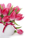 Pink tulips in a white pitcher isolated on white.