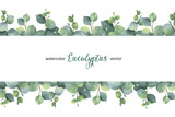 Watercolor vector green floral banner with silver dollar eucalyptus leaves and branches isolated on white background. - 168581981