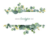 Watercolor vector green floral banner with silver dollar eucalyptus leaves and branches isolated on white background. - 168582106