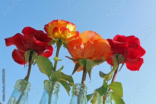 Vier Rosen Poster