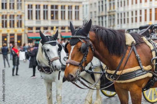 Fotobehang Brussel Horses on Grote Markt square in Brussels Belgium