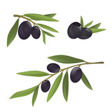 Olive branches with black olives