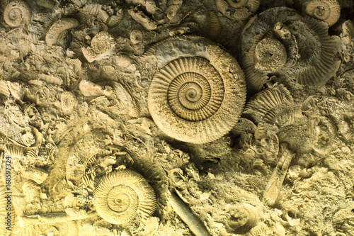Fossils in rock Billede på lærred