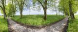 Panorama einer alten Baumallee mit Linden im Allgäu