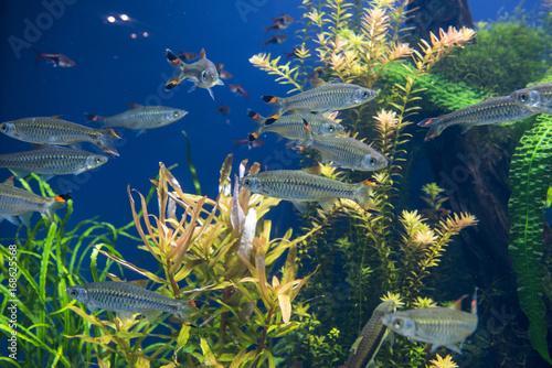 Fishes in aquarium Poster