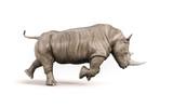 Rhino on white background - 168655173