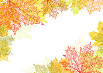 Autumn background and leaves of a maple