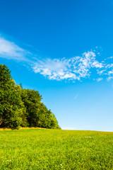 Beautiful summer scene with green meadow